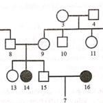 cho sơ đồ phả hệ mô tả sự di truyền của một bệnh ở người do một trong hai alen của một gen quy định. biết rằng không xảy ra đột 60619ae02f95f.png