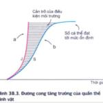 trong điều kiện môi trường bị giới hạn, sự tăng trưởng kích thước của quần thể theo đường cong tăng trưởng thực tế có hình chữ s 607c45dfb01a6.png