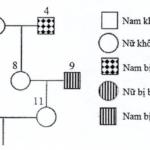 cho biết mỗi bệnh đều do 1 trong 2 alen của 1 gen quy định; gen quy định bệnh p nằm trên nst thường 60abc159d3c94.png