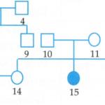 sơ đồ phả hệ dưới đây mô tả 2 bệnh di truyền ở người, trong đó có một bệnh do 1 gen nằm trên vùng không tương đồng của nst giới tính x quy định 60ac437acb2b8.png